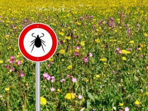 tick-warning-sign-in-a-meadow