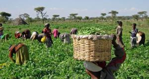 Nigeria farmers
